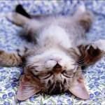 mieux dormir naturellement sieste